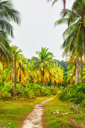 Фотография на тему Грунтовая дорога в джунглях на летний день, Таиланд