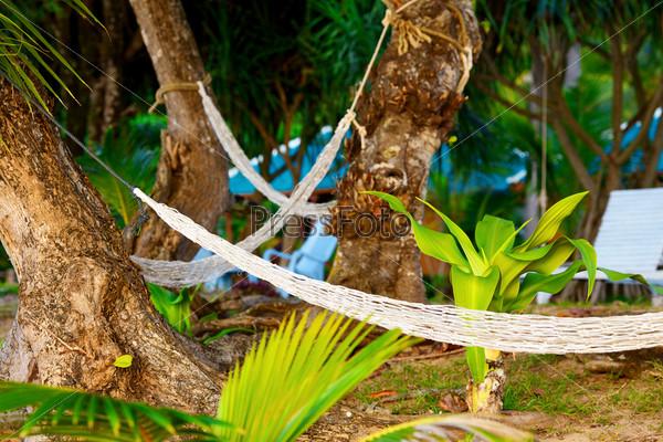 Фотография на тему Пустые гамаки между пальмами на песчаном пляже