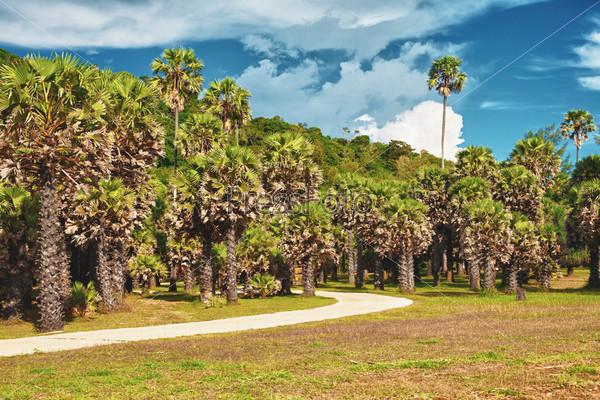 Парк с пальмами и дорожкой в летний день, Таиланд