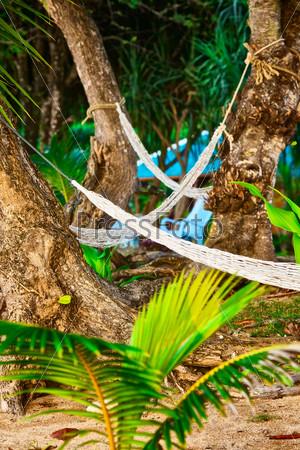 Пустые гамаки между пальмами на песчаном пляже