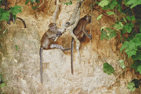 Макака сидит на корне большого дерева