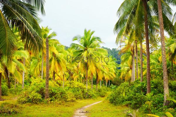 Грунтовая дорога в джунглях в летний день, Таиланд