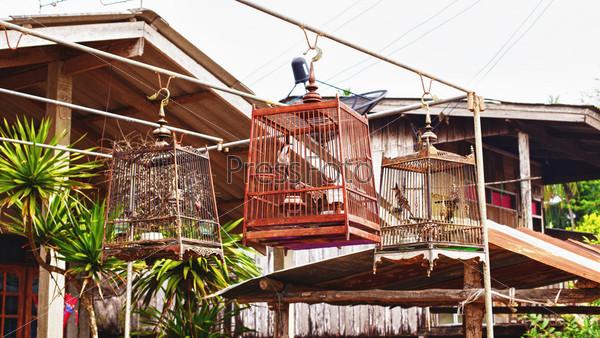 Птицы в клетках в традиционной тайской деревне