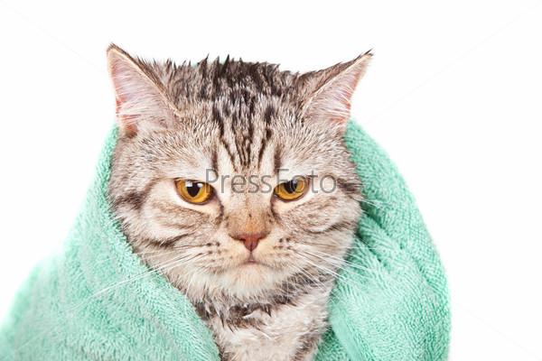 Сердитый кот в зеленом полотенце