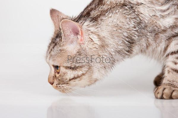 Кот унюхал следы жертвы