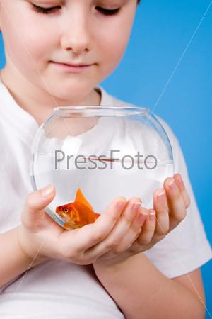 Фотография на тему Мальчик держит аквариум с золотой рыбкой на синем фоне