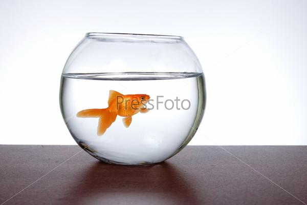Аквариум с золотой рыбкой на столе