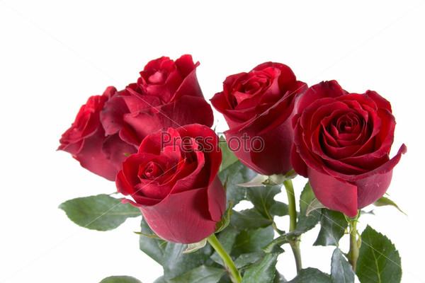 Букет из красных роз, изолированный на белом фоне