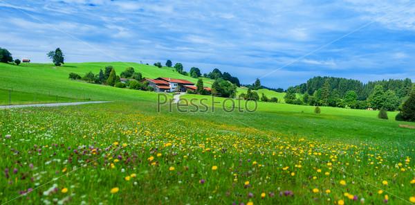 Мирный летний луг в Альпах. Австрия, окраина деревни Гозау