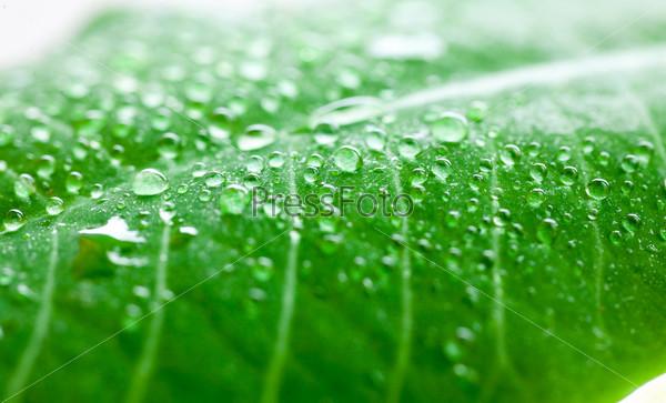 Зеленый лист с каплями воды крупным планом
