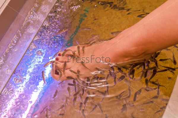 Рыботерапия, оздоровительная процедура для кожи ног, в спа