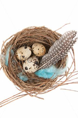 Фотография на тему Перепелиные яйца в гнезде на белом фоне