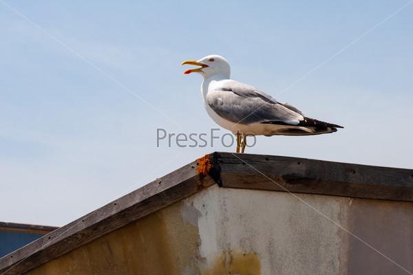 Одинокая чайка на фоне голубого неба