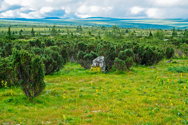 Тундра на плато Кваркуш, Пермский край