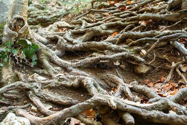 Корни деревьев на земле