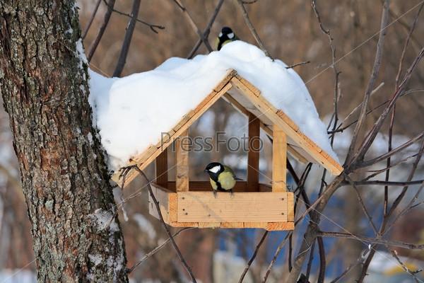 Кормушка для птиц в зимнем парке