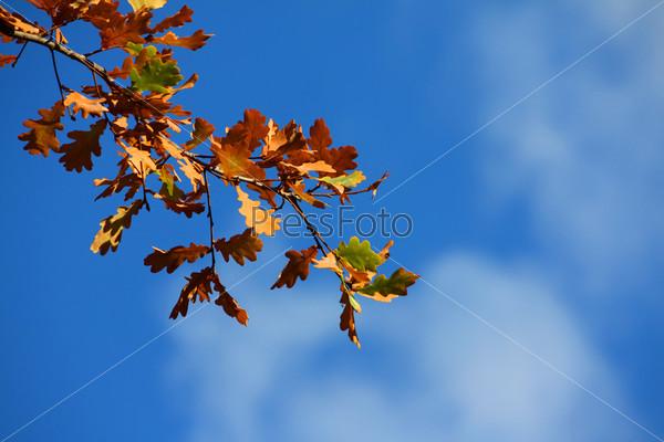 Осенние листья на дереве на фоне голубого неба