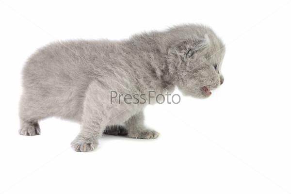 Маленький котенок на белом фоне