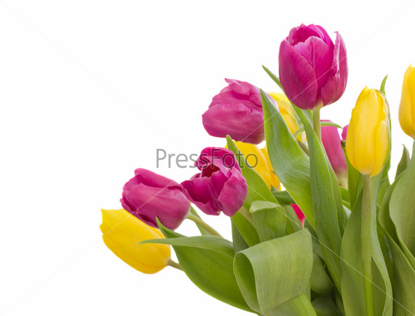 Фотография на тему Букет тюльпанов на белом фоне
