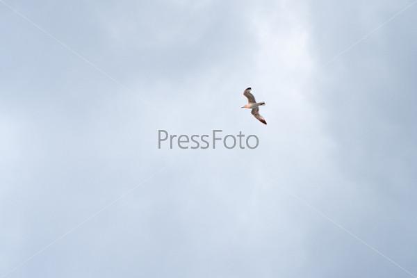 Фотография на тему Чайка в небе