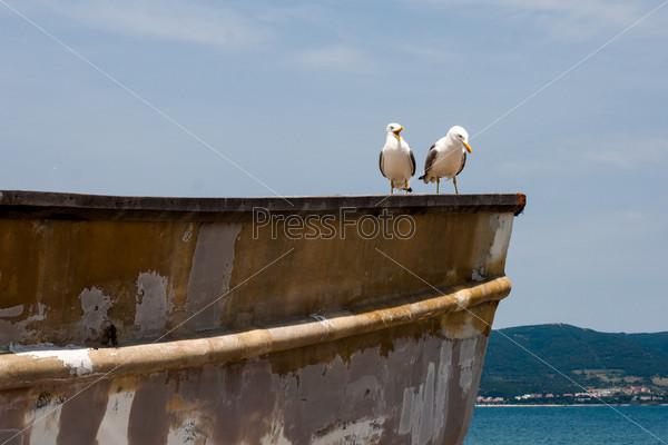 Две чайки на борту корабля на фоне голубого неба