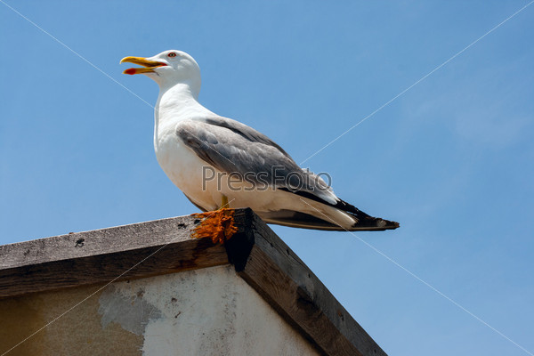 Чайка на борту корабля на фоне голубого неба