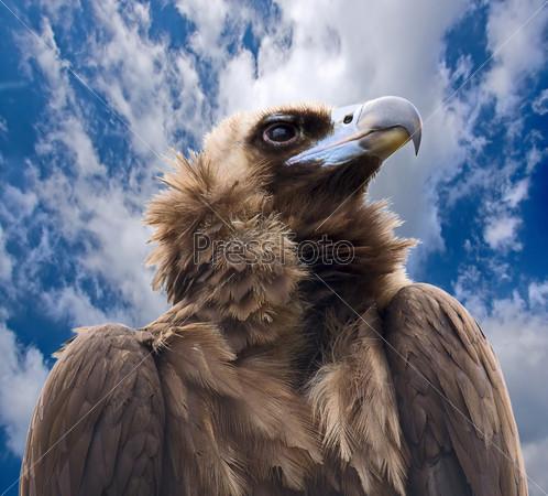 Хищная птица на фоне неба