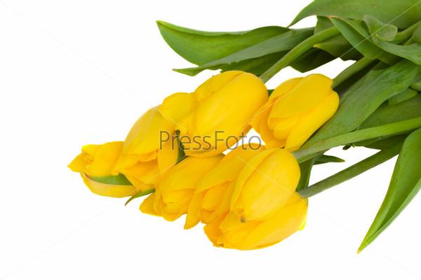 Букет свежих тюльпанов, изолированный на белом фоне