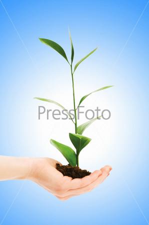 Фотография на тему Зеленая рассада с землей в ладонях на голубом фоне
