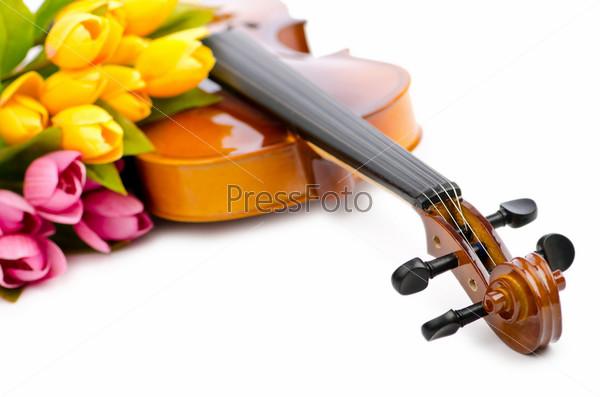 Скрипка и тюльпаны на белом фоне