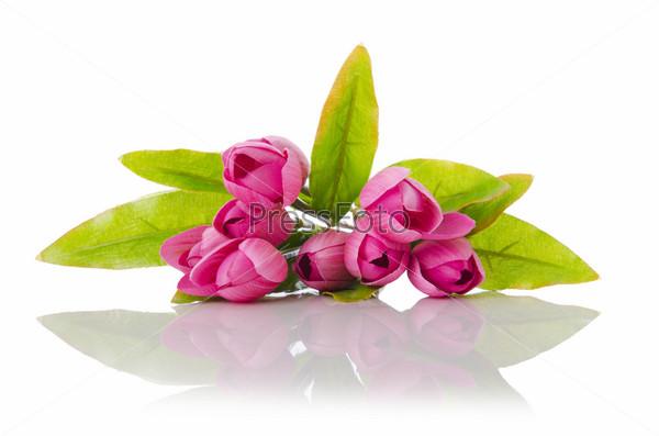 Тюльпаны, изолированные на белом фоне