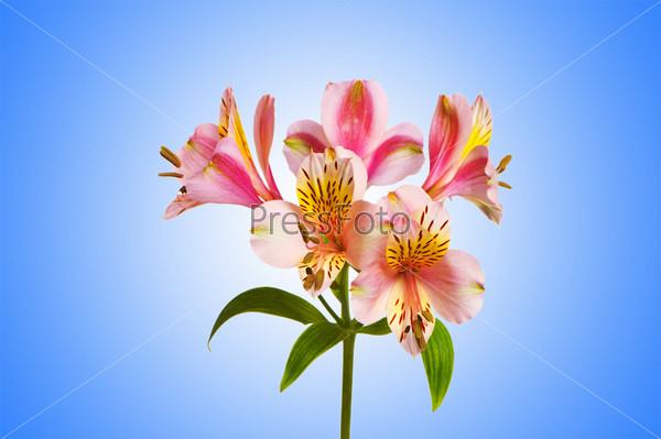Фотография на тему Яркие лилии