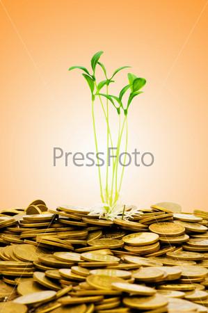 Фотография на тему Зеленый росток с монетами