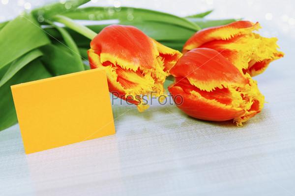 Фотография на тему Оранжевые тюльпаны и пустая визитная карточка