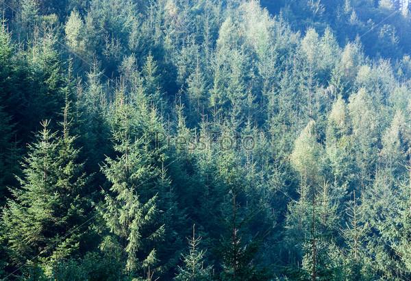 Фотография на тему Лес на склоне гор