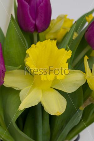 Букет из тюльпанов и нарциссов на белом фоне