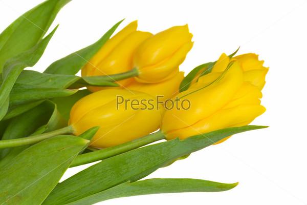 Фотография на тему Букет из тюльпанов на белом фоне