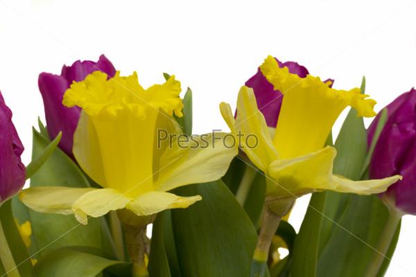 Фотография на тему Букет из тюльпанов и нарциссов на белом фоне
