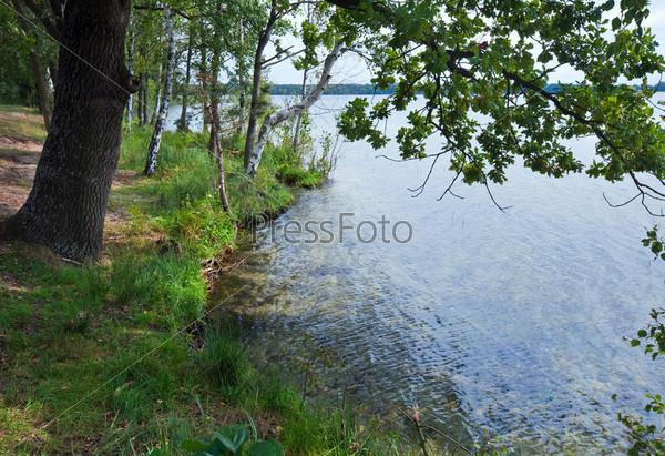 Летний дуб на берегу озера