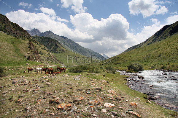 Горы. Киргизия