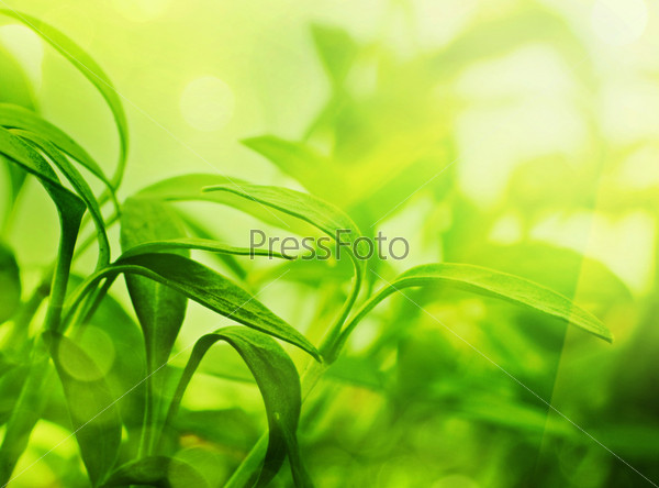 Фотография на тему Свежие листья