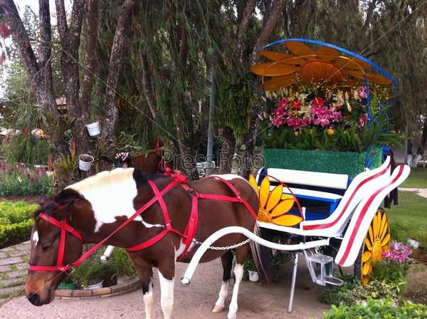 Лошадь в парке