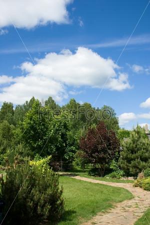 Летний пейзаж, зеленые деревья на фоне голубого неба и белых облаков