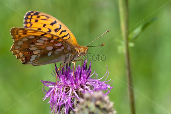 Фотография на тему Бабочка на цветке