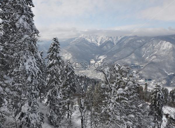 Горный лес зимой. Вид на Красную Поляну, Сочи