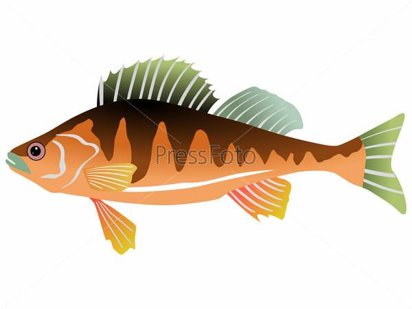 Опасная масляная рыба  ЯПлакалъ