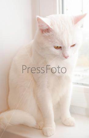 Белый кот сидит на подоконнике