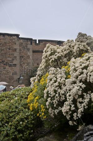 Цветы на фоне Эдинбургского замка в Шотландии, Англия