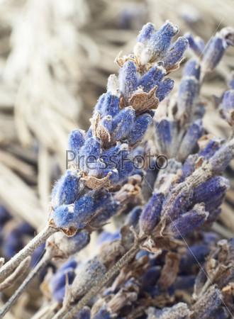 Фотография на тему Сушеные цветки лаванды
