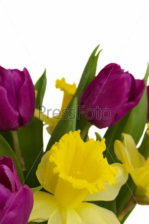 Фотография на тему Букет из тюльпанов и нарциссов